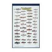 Freshwater Fish N. America Card