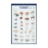 Land Mammals N. America Card