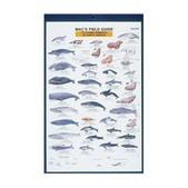 Marine Mammals N. America Card