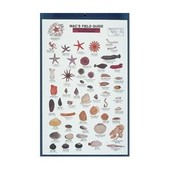 N.E. Coastal Invertebrates Card