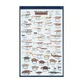 Reptiles Of N. America Card
